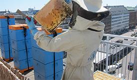 foto: The Copenhagen City Bee Project (bybi)